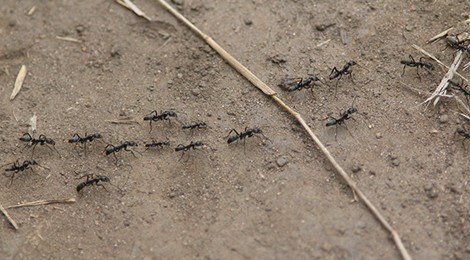 Ants are far better drivers than we are
