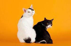 Afbeelding via Catster.