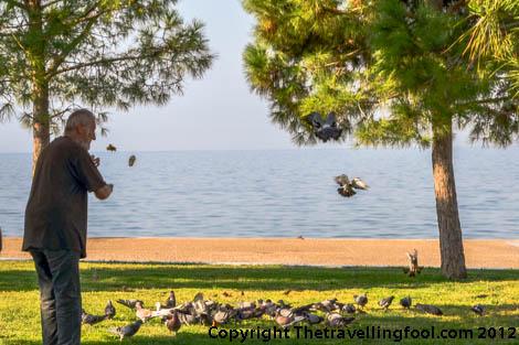 Thessaloniki Greece-bird feeding