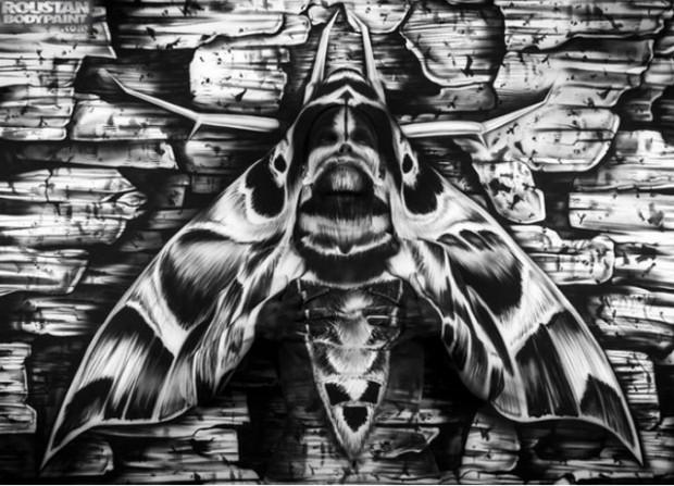 moth-pic-620x447