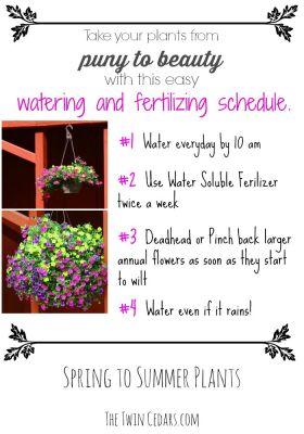 Easy Garden Ideas & watering schedule