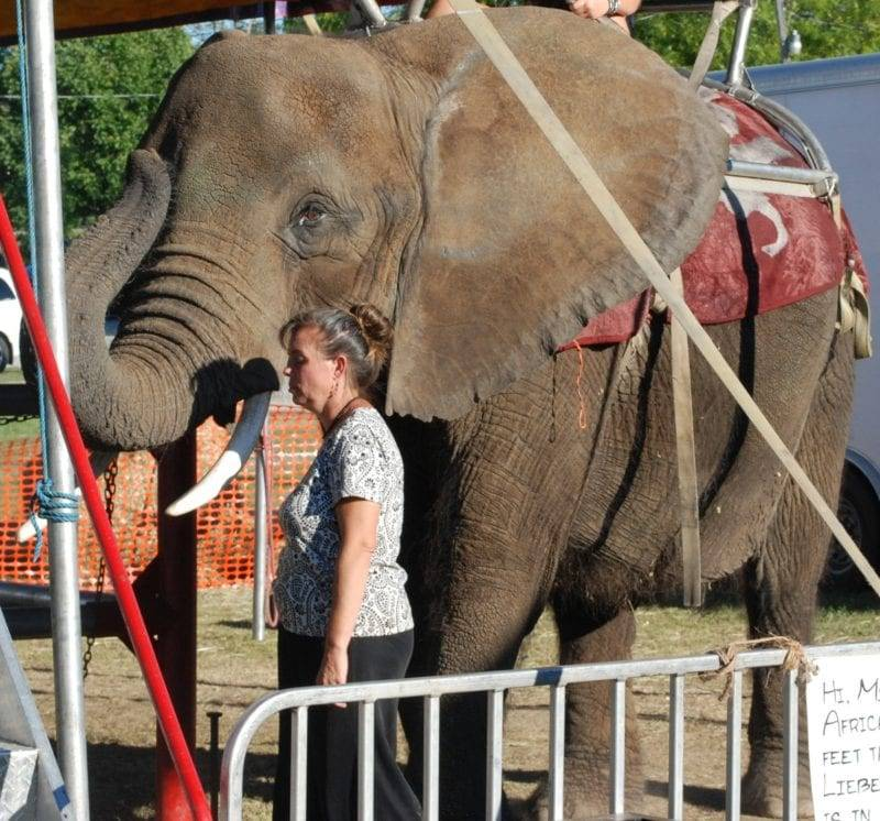 PETA Asks For Boycott On Venues Featuring Elephant, Nosey, That Appeared At Williams County Fair