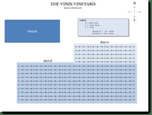 The Vines First Vineyard