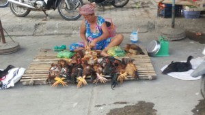 Yup, those chickens are still alive. Safety and animal rights are non existant in South East Asia