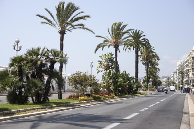 nice-promenade-view-palm-trees