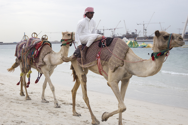 dubai-phototravel-marina-camel-ride-03