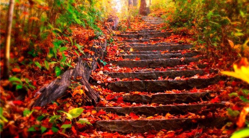 taken from: http://miriadna.com/desctopwalls/images/max/Autumn-steps.jpg