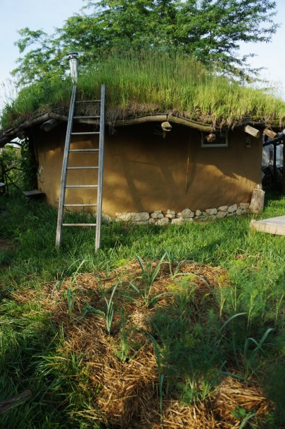 Cob House - Living Green Roof
