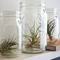 Loving...air plants