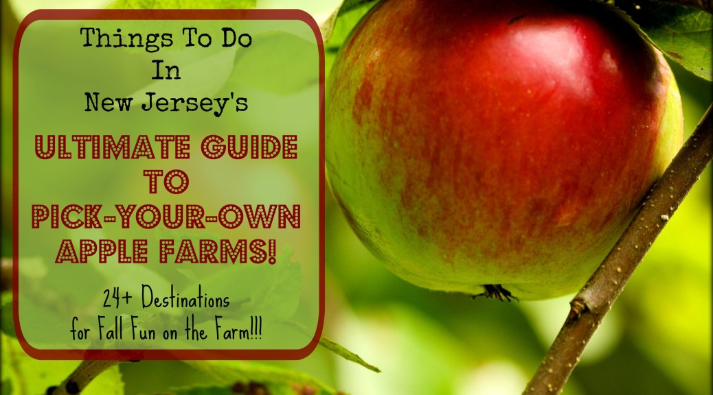 Pick-Your-Own Apple Farm in New Jersey | Things to Do In New Jersey | apple picking in New Jersey | pick your own apple farms in NJ | u pick apple farms in NJ | apple picking in NJ | pick your own apple orchards in NJ
