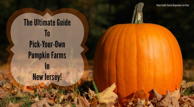 The Ultimate Guide To Pick-Your-Own Pumpkin Farms In New Jersey! | Things To Do In New Jersey | #pumpkinpicking #pickyourownpumpkins #nj #newjersey #fallfun #fieldtrips #pumpkin #farms | | pick your own pumpkin farms in New Jersey
