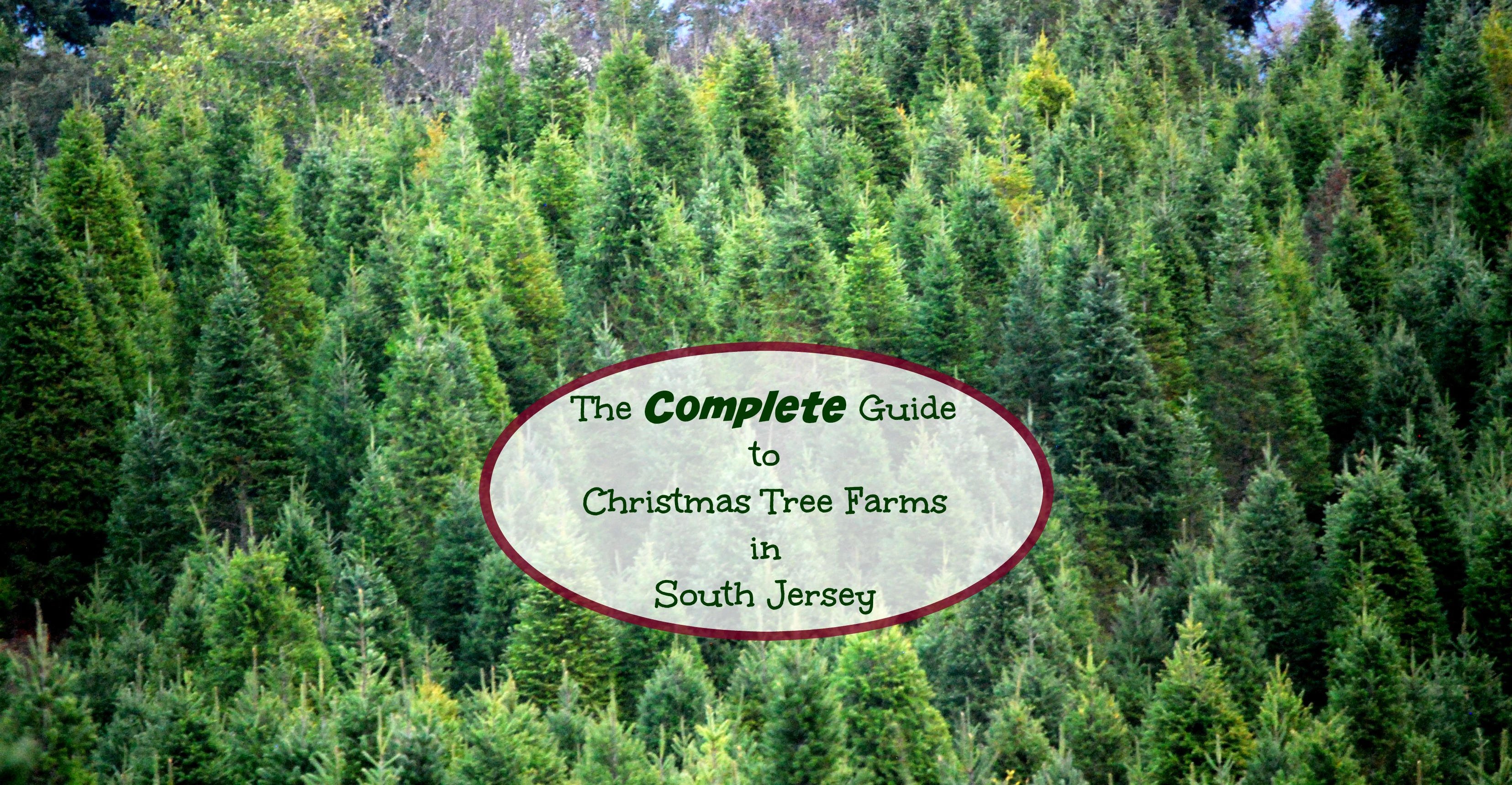 The Complete Guide to Christmas Tree Farms In South Jersey - Things ...