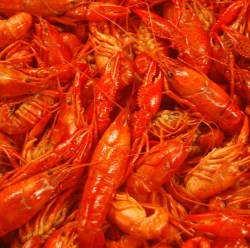 Michael Arnone's Crawfish Fest - one of the top 5 things to do in New Jersey this week! | find out more at www.thingstodonewjersey.com | #nj #newjersey #sussexcounty #andover #events #festivals #food #thingstodo