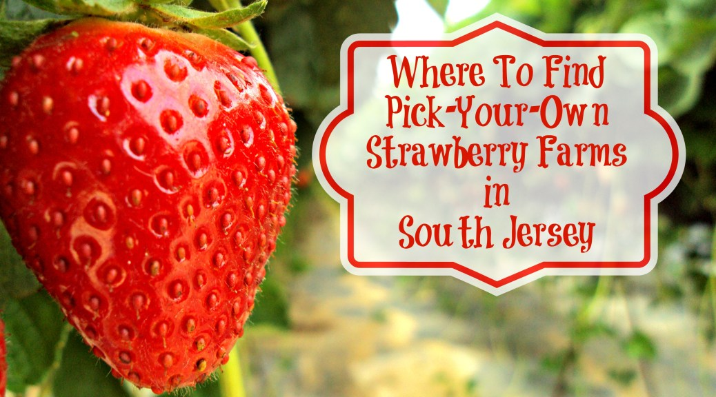 Where To Find Pick Your Own Strawberry Farms in South Jersey - A Complete Guide to Strawberry Picking in Southern New Jersey! | find out more at www.thingstodonewjersey.com | #nj #newjersey #southjersey #pickyourown #strawberry #strawberries #farms #farm #strawberrypicking #burlingtoncounty #camdencounty #gloucestercounty #cumberlandcounty #medford #springfield #cherryhill #bridgeton #sewell #monroeville #glassboro #thingstodo #familyfriendly #jerseyfresh