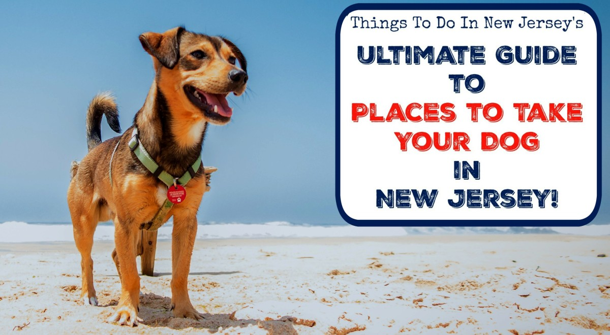 The Ultimate Guide to Places to Take Your Dog In New Jersey