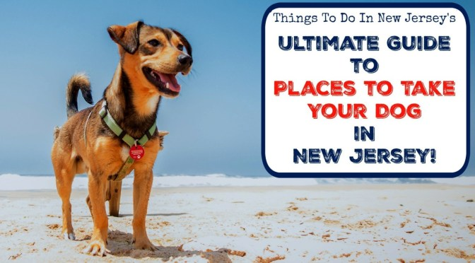NJ's Ultimate Guide to Dog-Friendly Destinations in the Garden State! | Dog-friendly Attractions in NJ | Places to take your dog in NJ | Places to bring your dog in NJ | Places to take your dog in New Jersey | Places to bring your dog in New Jersey | dog-friendly beaches in NJ | dog-friendly NJ destinations | dog-friendly restaurants in NJ | NJ dog parks