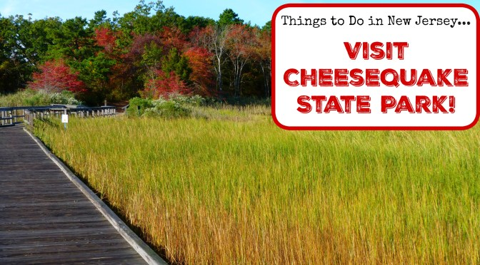 Things To Do in New Jersey – Visit Cheesequake State Park!