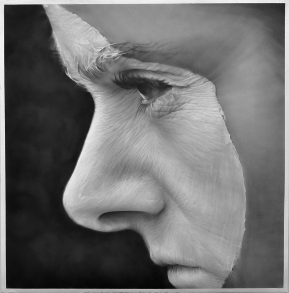 """Crested, graphite on paper, 50 """" x 50 """""""