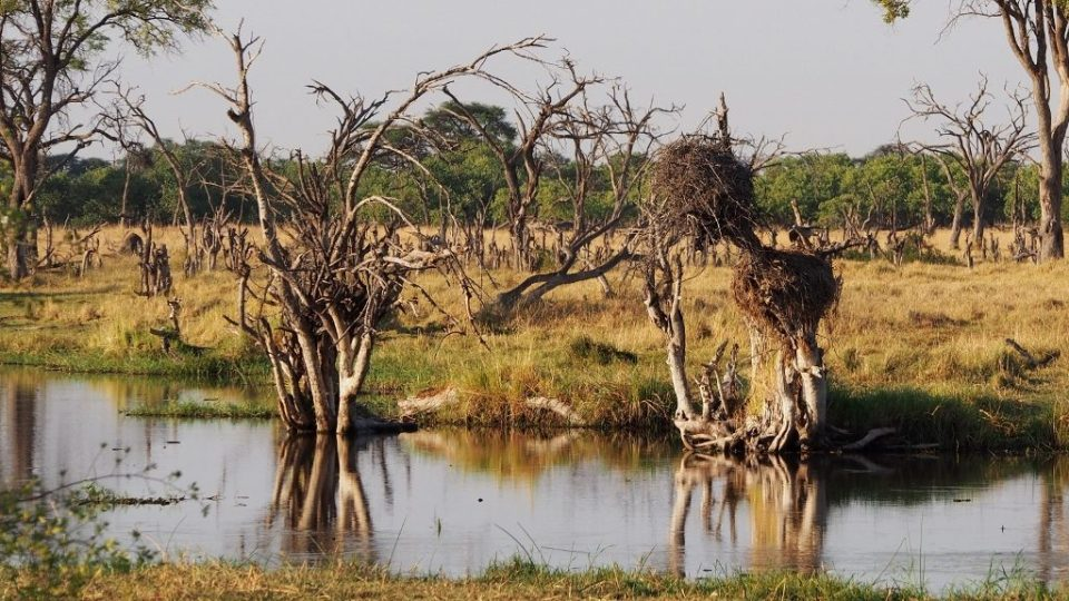 Nest, Botswana