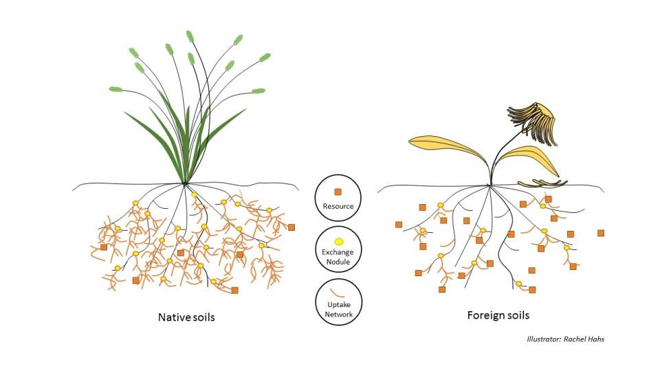 Diagram_Mychorrhizal symbioses_strategy