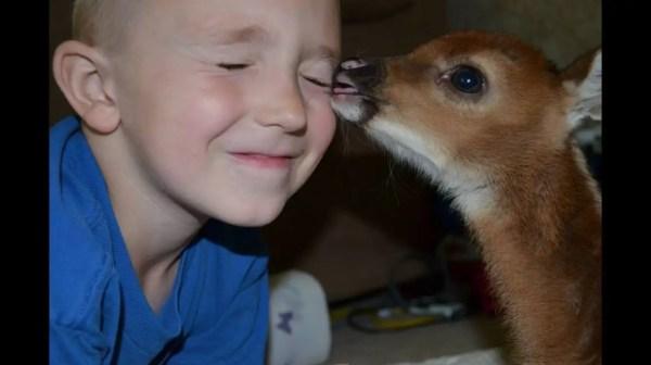 Deer-Boy