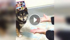 dog-sees-magic