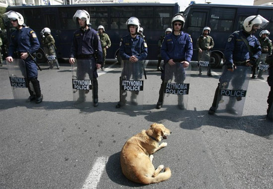 dog-police