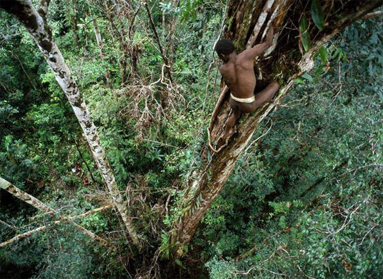 tree-man-climbing