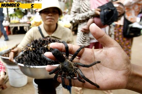 spiders-food