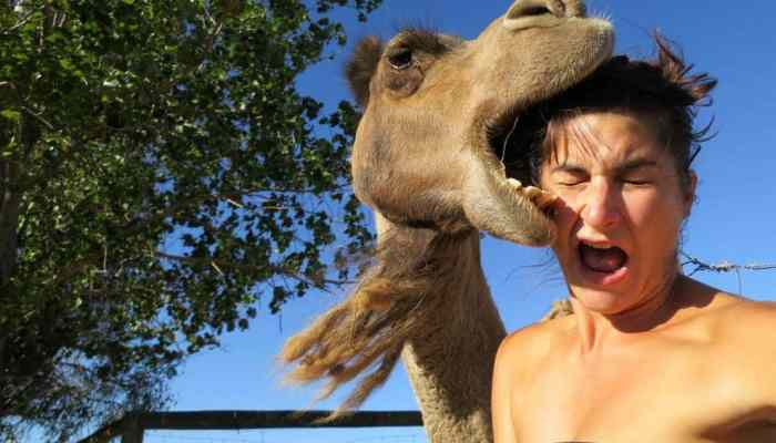 Selfies Gone Wrong and Intruding Animal