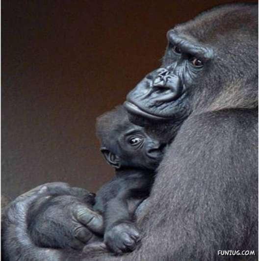 Cute Animals and the Cute Gorilla