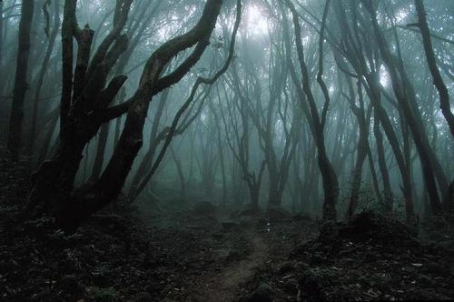 dark_forest_large