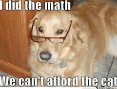 Cheeky Pooches on the Internet: The Funniest Dog Memes