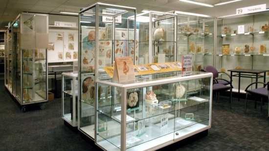 7 of the World's Strangest Museums6