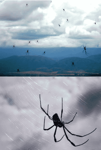 Raining Spiders