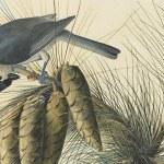 the new york historical society audubon