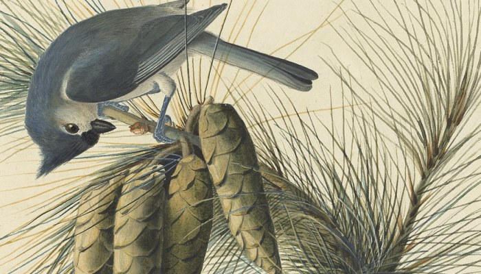 the new york historical society audubon