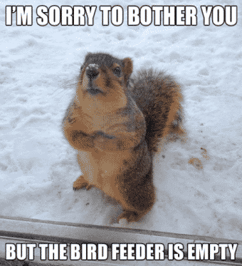Best Animal Memes