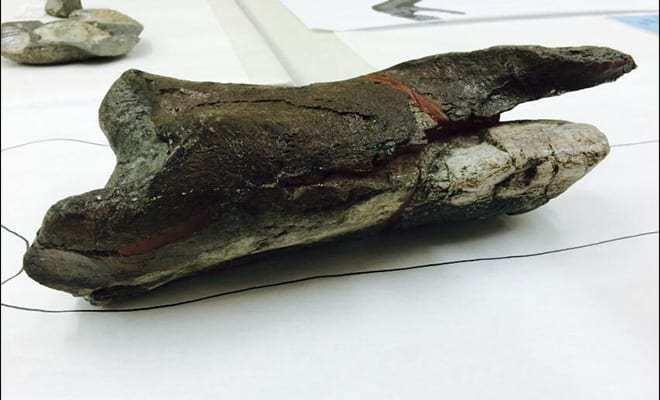Dinosaur Fossil Found in Washington