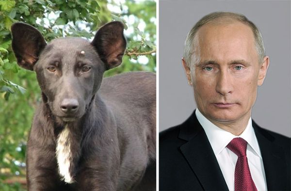 Celebrity Lookalikes - Putin And A Dog