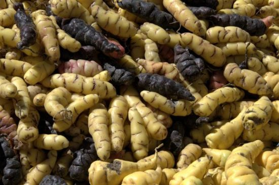 Vegetables That You Know Nothing About - Oca