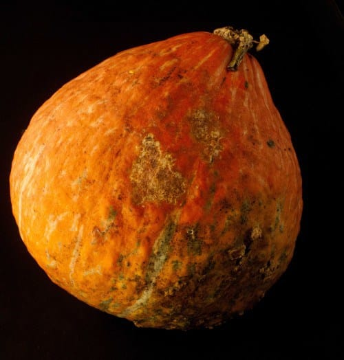Hubbard Squash - Vegetables That You Know Nothing About