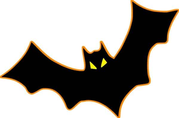 Facts That You Thought To Be True: Bats Are Blind