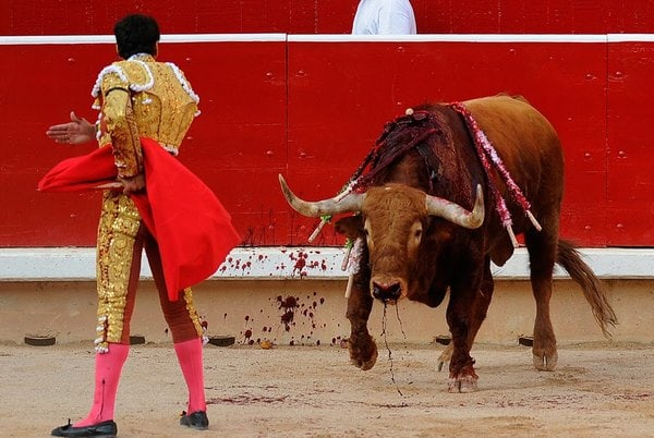 Facts That You Thought To Be True: Red Enrages Bulls