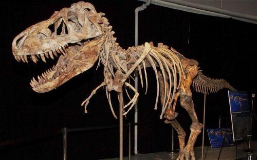 Amazing Facts About Dinosaurs - Lifespan
