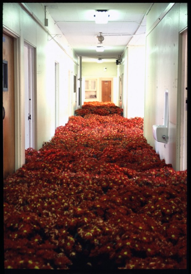 Bloom: 28,000 Potted Flowers Installed at the Massachusetts Mental Health Center installation flowers art