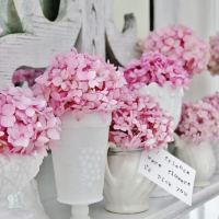 How to Make Your Hydrangeas Bloom