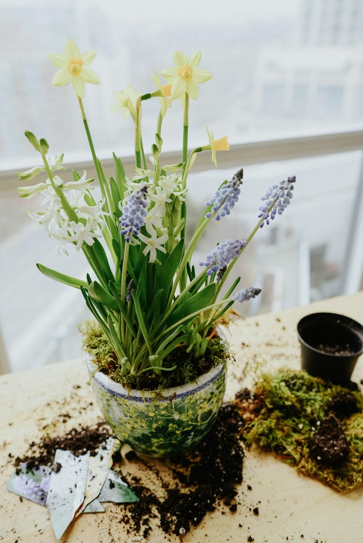 anthropologie-planter-arrangement-13