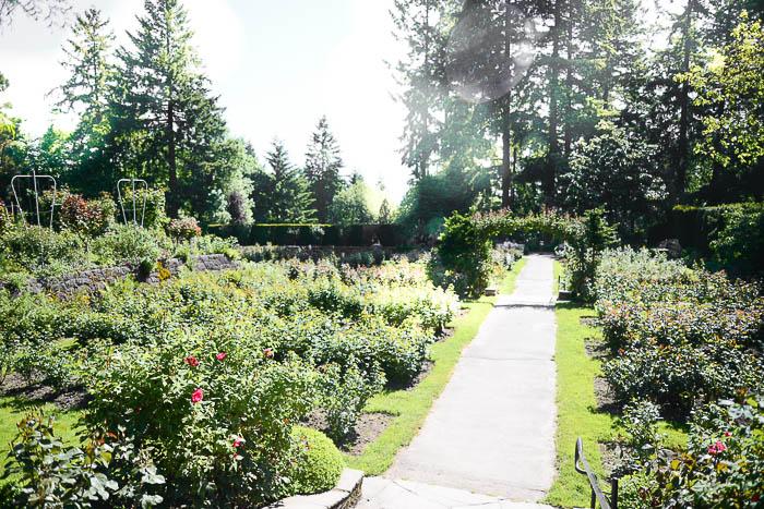 The Rose Garden in Portland