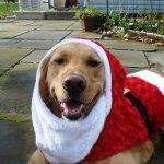 Duke-Christmas